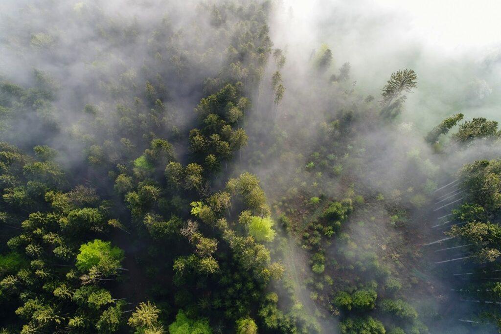 Ein Wald von oben an einem Frühlingsmorgen im Nebel