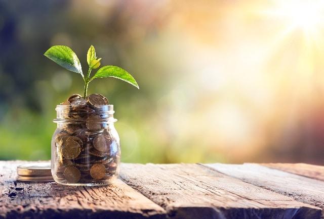 Pflanze die in Münzen wächst
