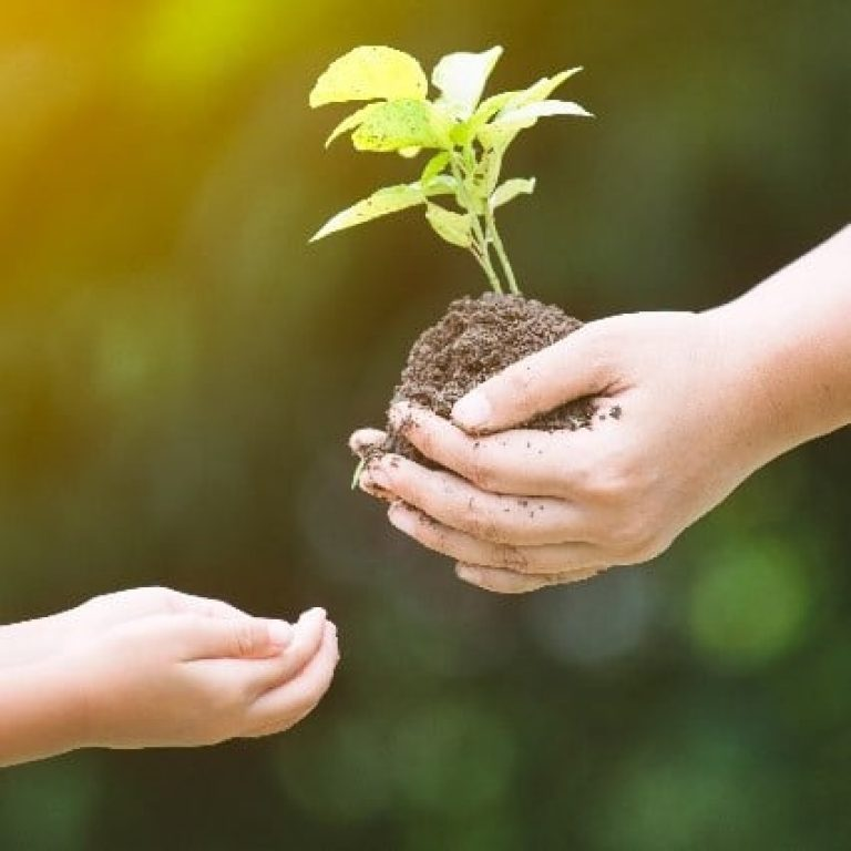 Mutter reicht Kind Pflanze