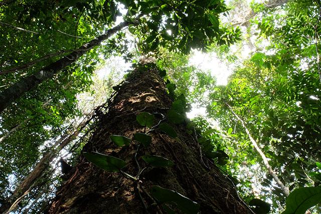 Baum des Generation Forest