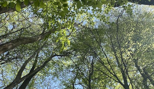 Ausschnitt Wald