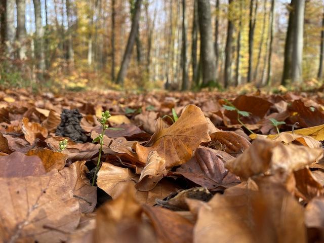 Waldboden im Hebst
